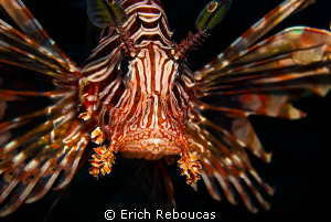 Lionfish.